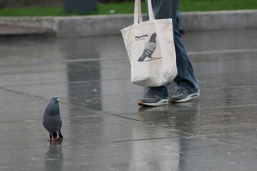 pigeon blog, trafalgar square