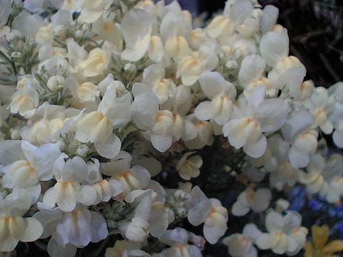 Creamy whites
