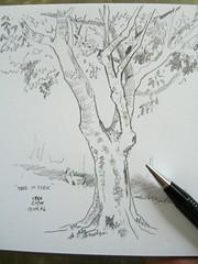 190406 Tree in Park 017c