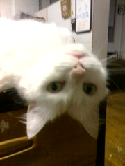 Upside Down Minni