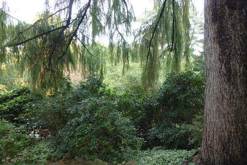 Alter Botanischer Garten Kiel