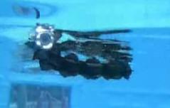 Robot serpiente marina