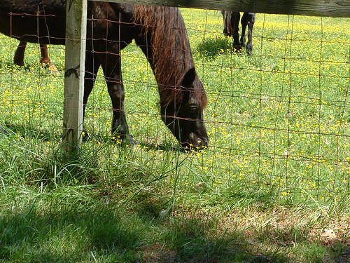 Neighbor Horses
