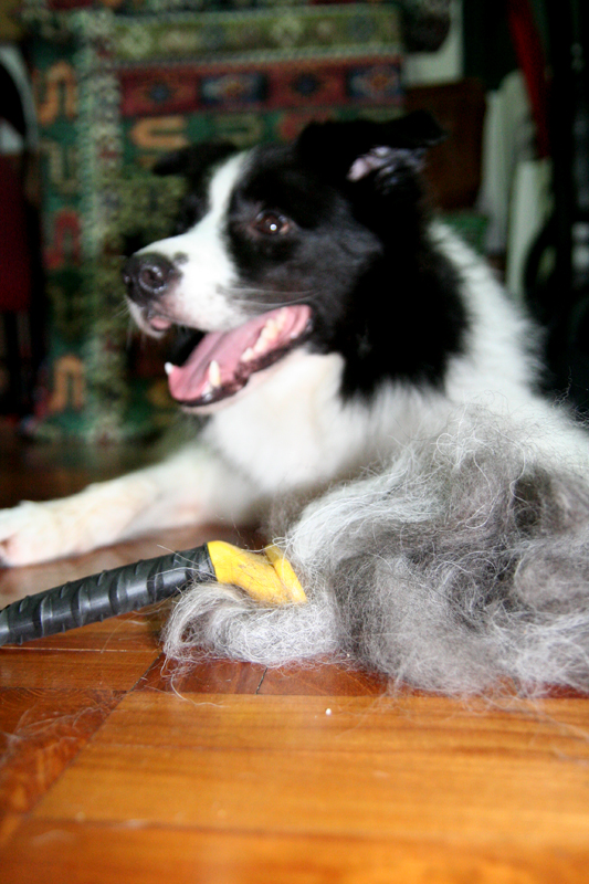 Fur for donation