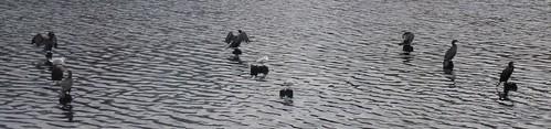 Kieler sø
