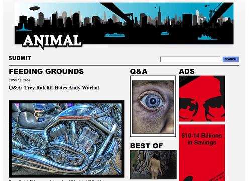 Animal New York Article