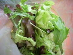 csa share july 10th mixed greens