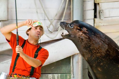 Mens met zeeleeuw en vis