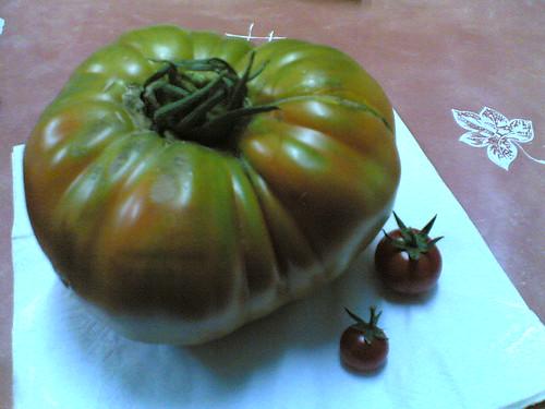 La familia tomate