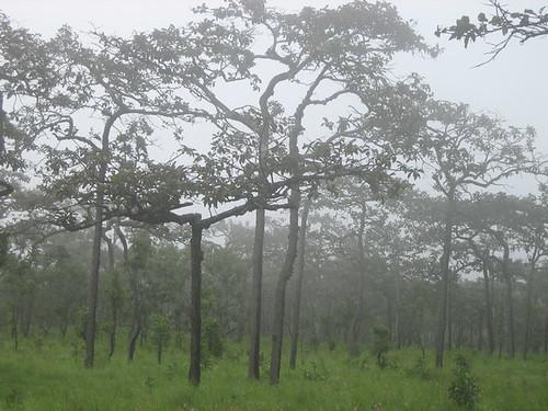 Teng Rang forest