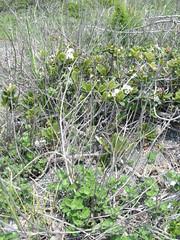 dune plant life2