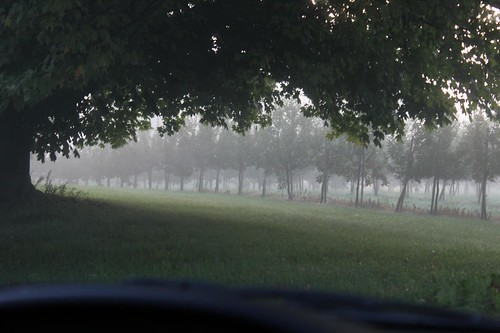 Apples In The Fog