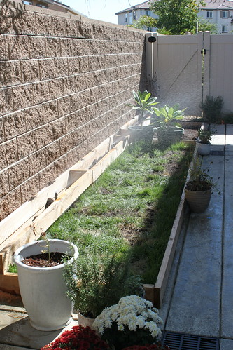 Grass Planter Sprinkler Installation