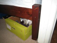 Shuggie hiding when ill