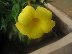 Flower :)