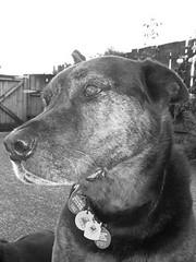Duke in Profile