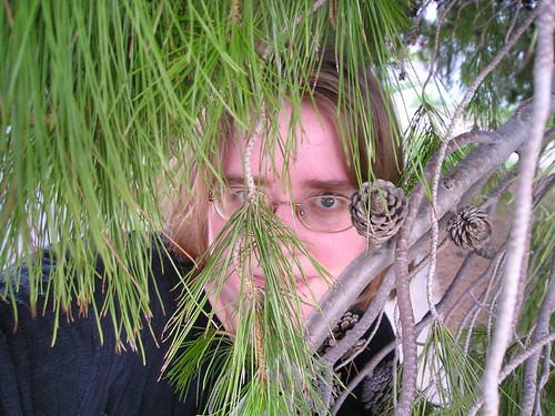enclosed in a tree