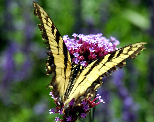 Butterfly & Flower