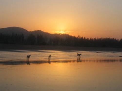Harihareshwar - sunrise