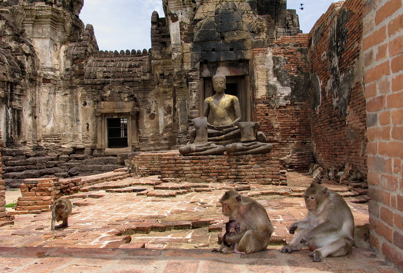 Image Result For Chicos Tailandia