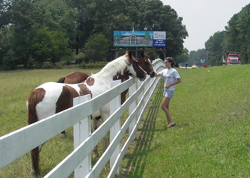 horses2446