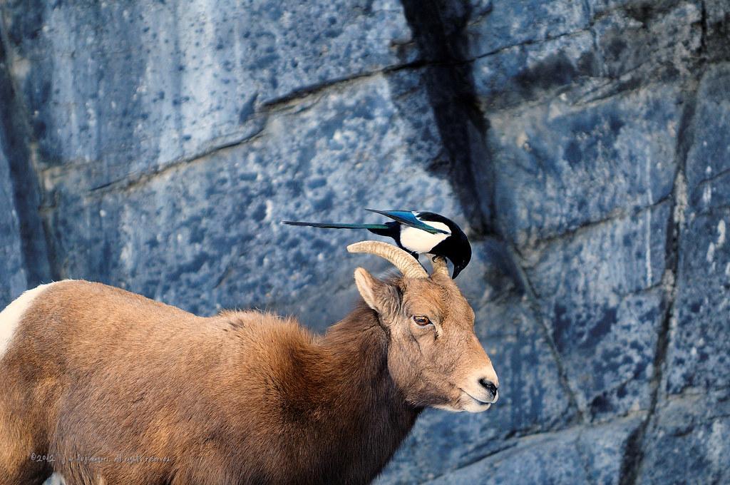 Big Horn & Friend