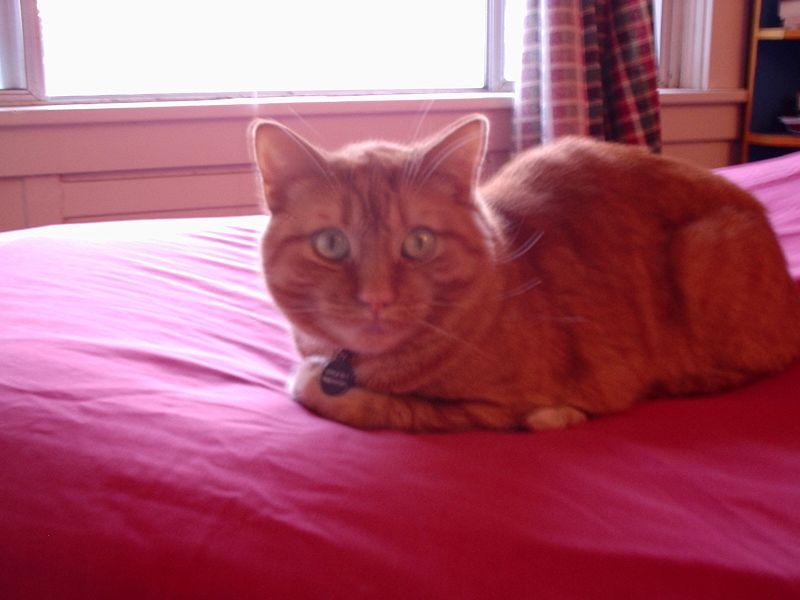 Rather orange cat