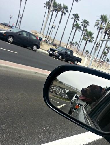 Doggie Beach_772013_13