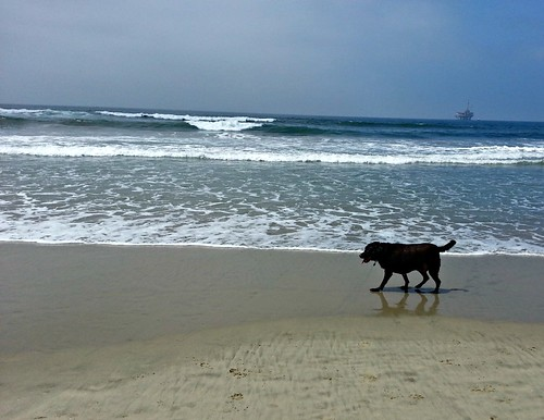 Doggie Beach_772013_11