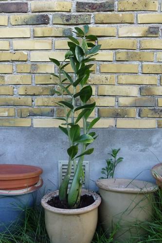 Ompostning af potteplanter