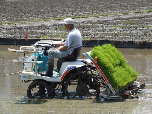 Plantando