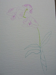 Orchids 1 - by Mrs RamblingLibrarian