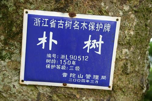 2006.06.24Dinghai (7)
