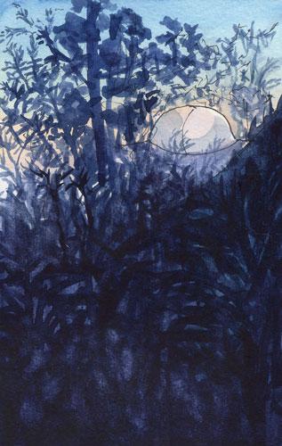Night-Backyard-web