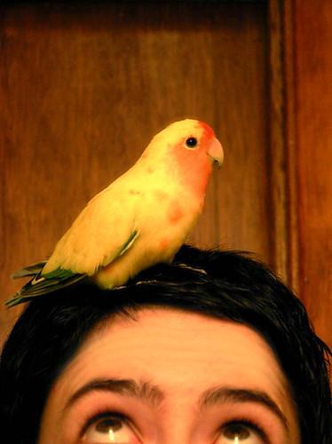 Yuuki's perch
