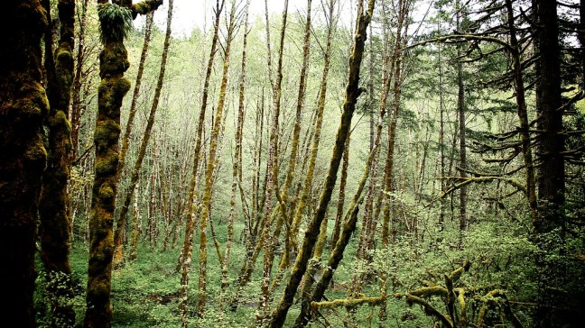 Mossy forests of Oregon