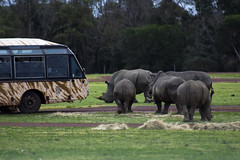 Buses at Werribee Open Range Zoo