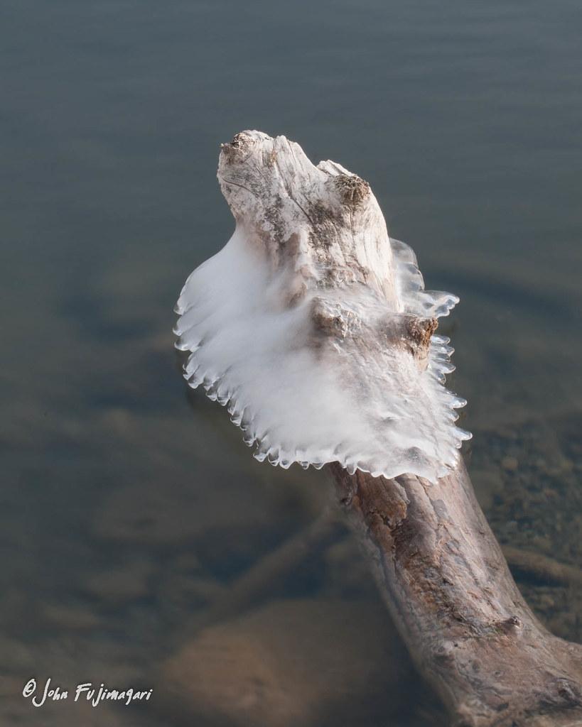 Stump In The Ice
