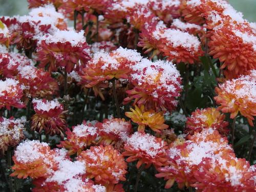 Snowmum