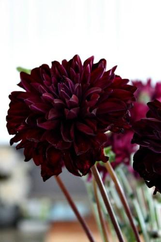 Trader Joes Flowers Mums_2