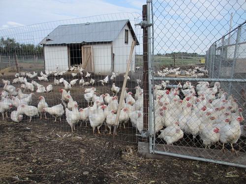 Schielke Farm