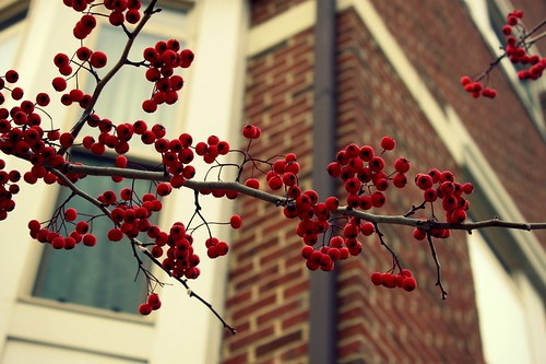 Winter Berries_1