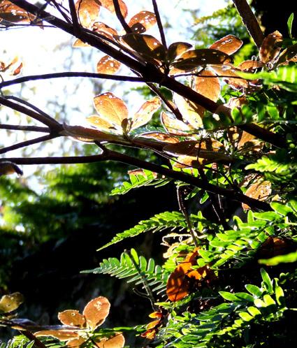Bear Heaven foliage