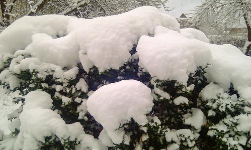 Ankstyva žiema