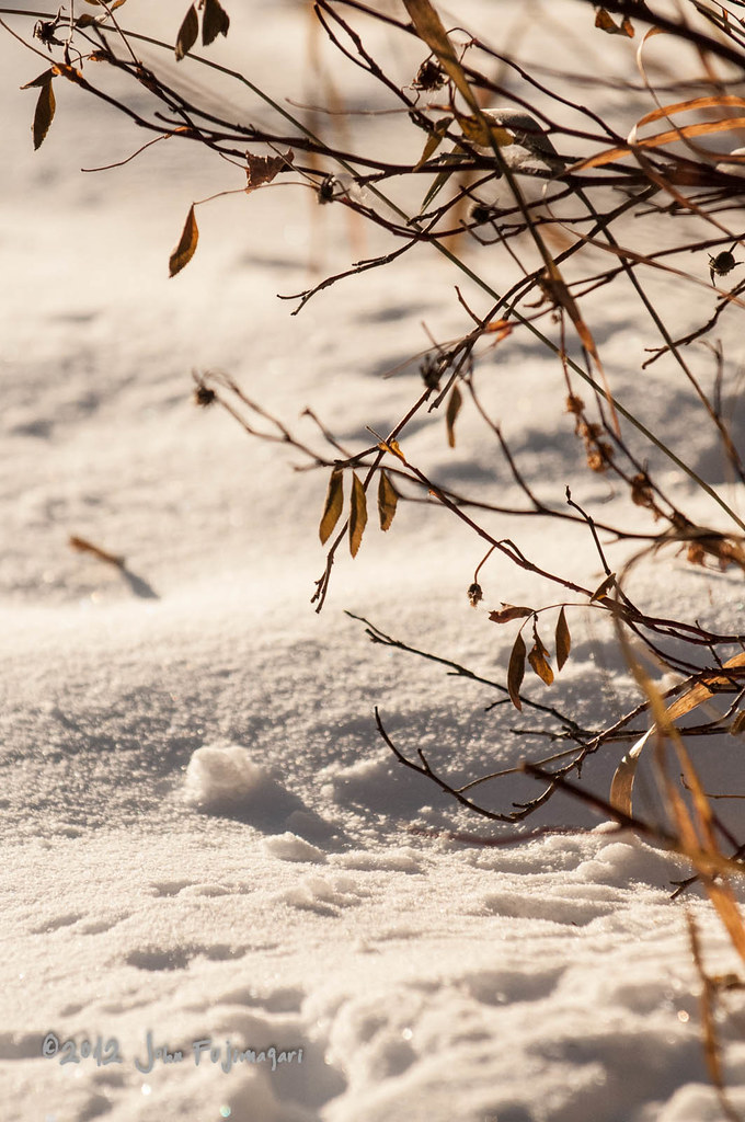 Snow And Twigs