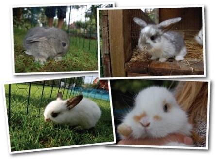 4 rabbits