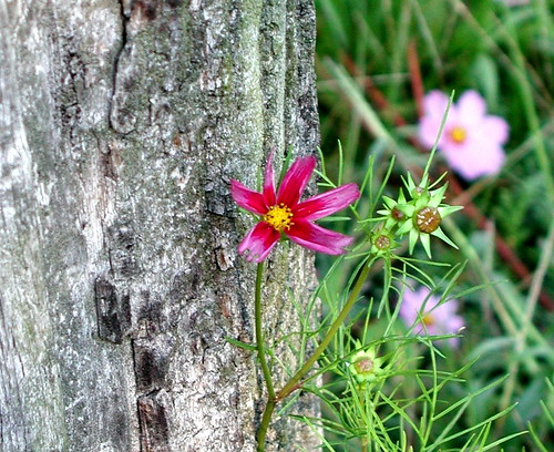 flower and fencepost