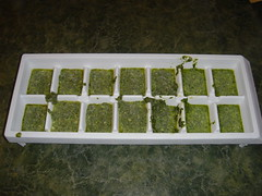 Cube Tray