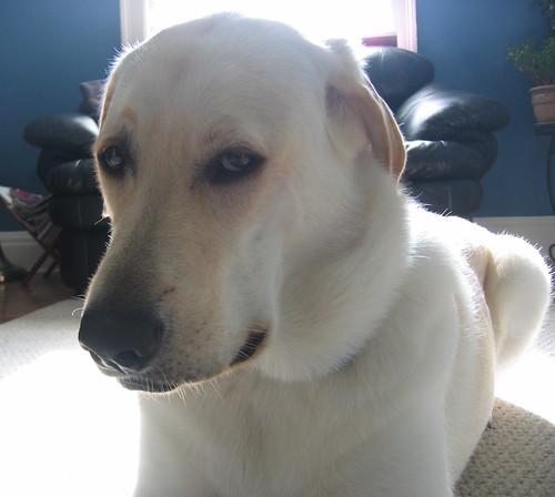 Skeptical Oliver