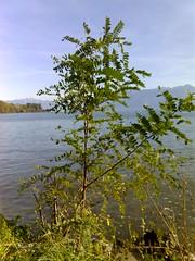 balade bord du lac oct 06 (14)